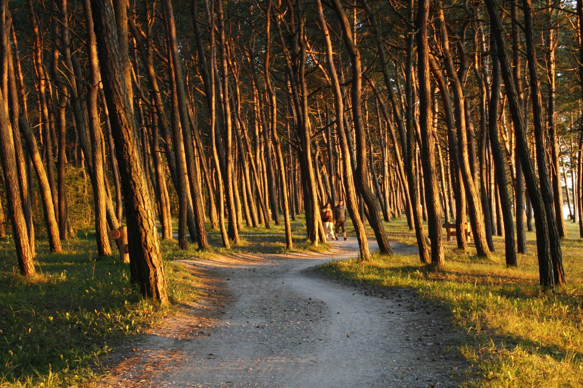 Pirita forest in Tallinn, Estonia