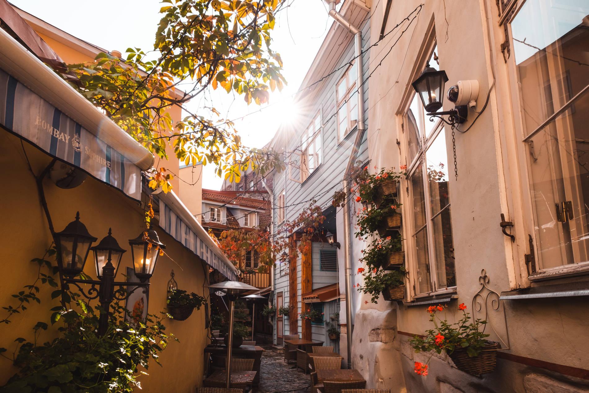 Hidden garden in Tallinn Old Town