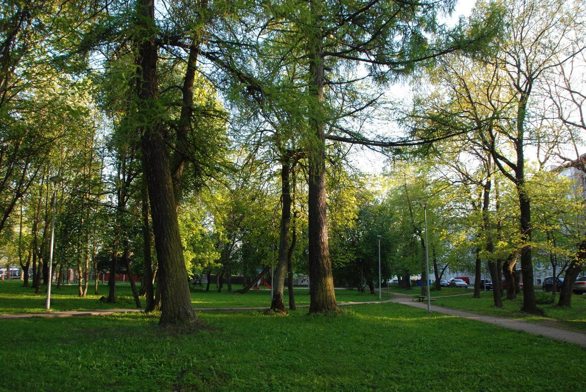 Cederhelmin puisto Tallinnassa