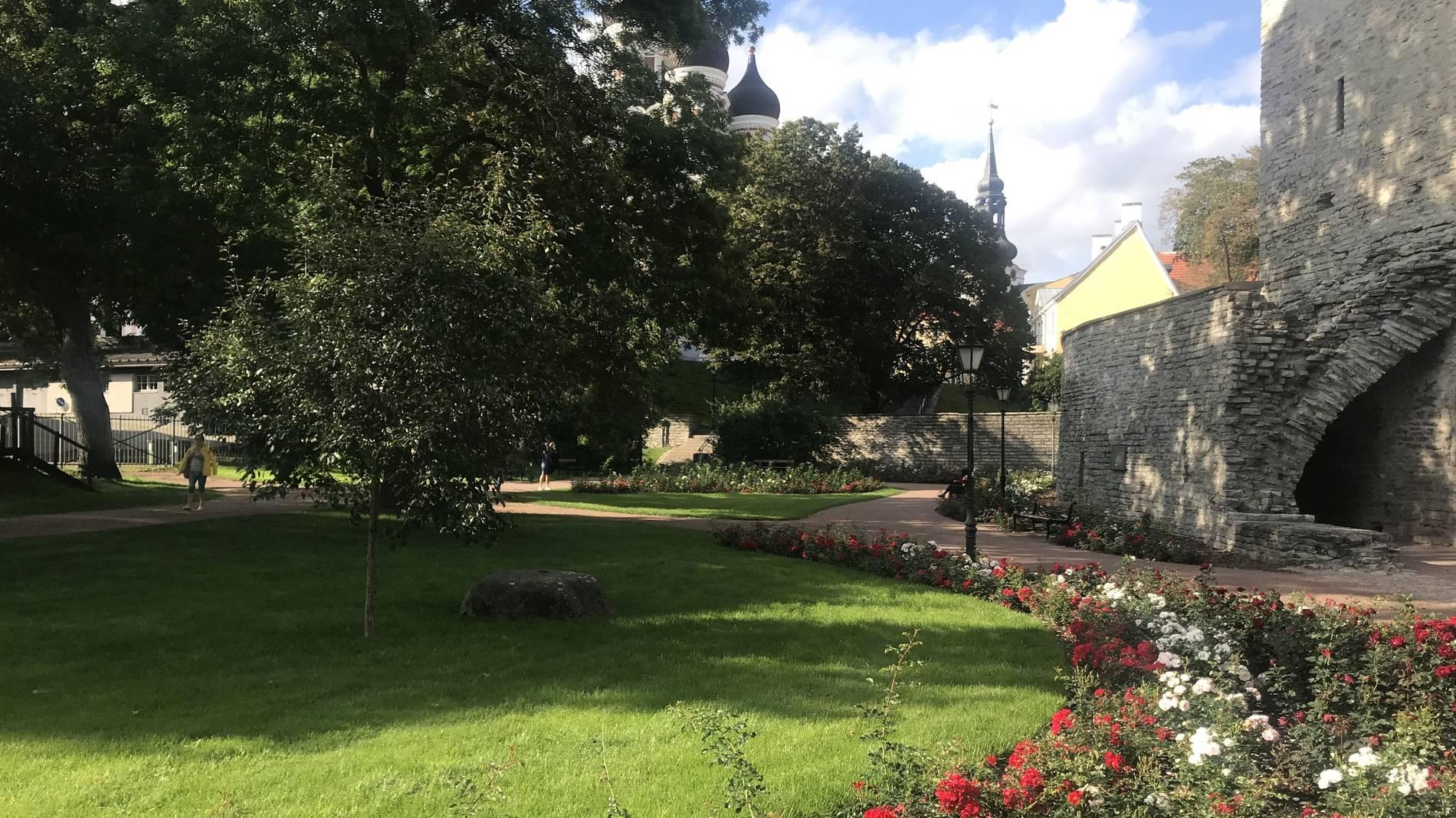 Danish Queen's Rose Garden
