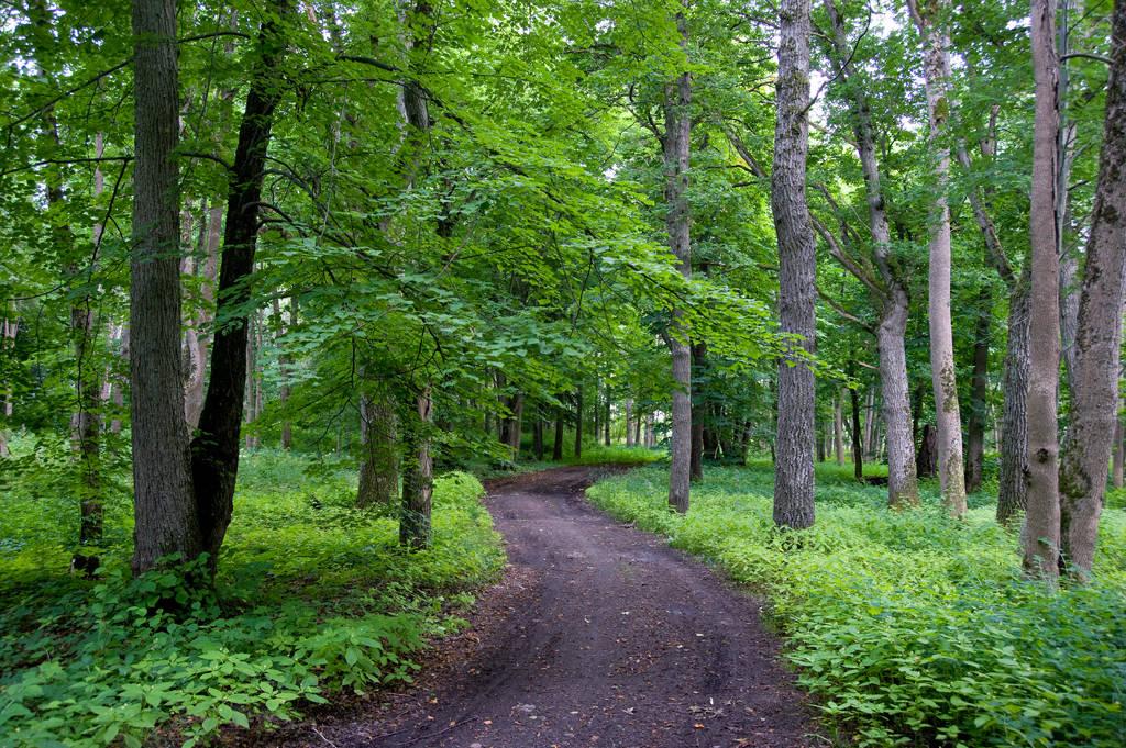 mullane rada suurte lehtpuude all suvel Harku metsa loodusrajal Tallinnas Nõmmel