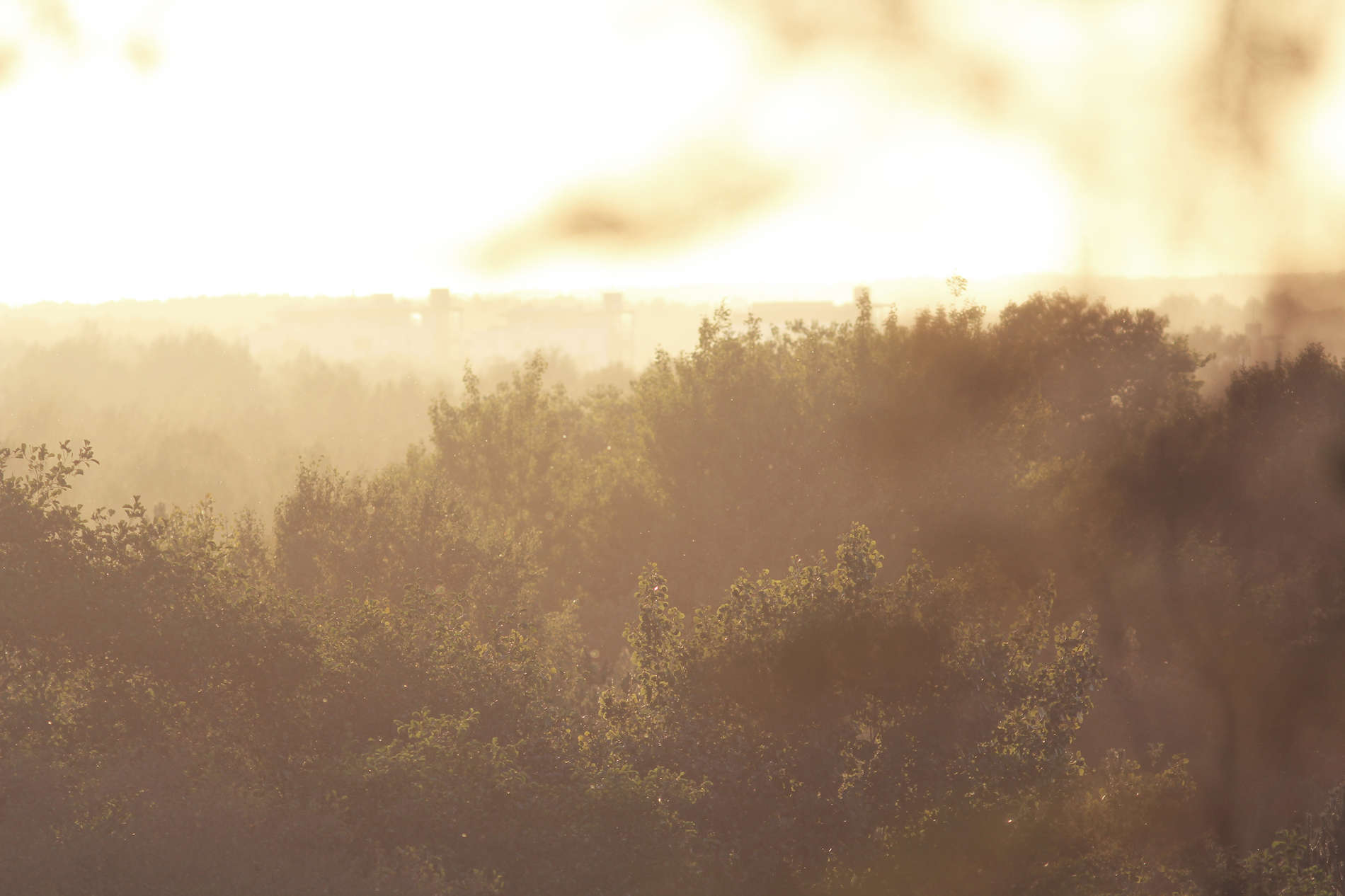 Naturschutzgebiet Nõmme-Mustamäe