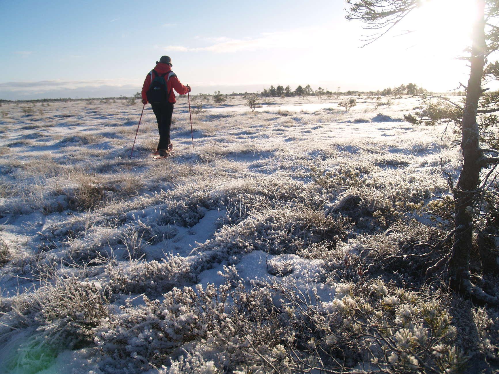 Schneeschuhwandern und Beobachtung von Wildleben