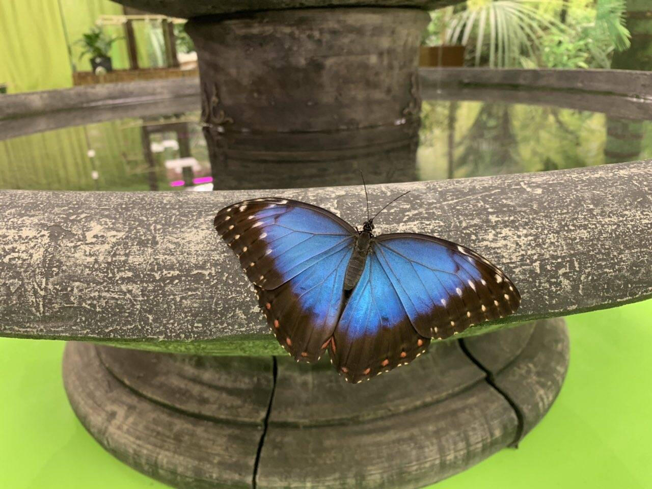 Butterfly Garden Tallinnassa